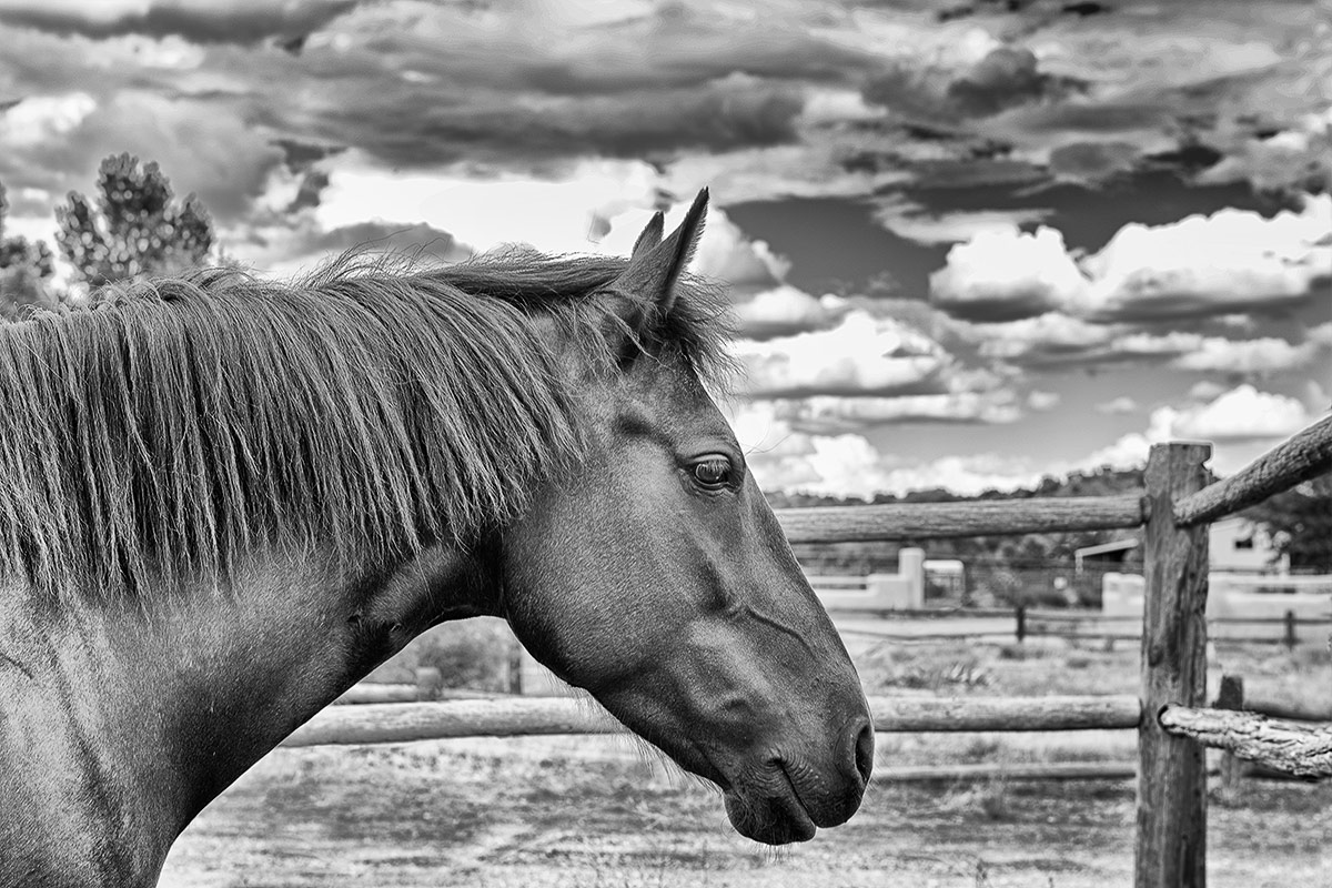 Horses black and white portrait of horse with stormy sky photographed by Cate Goedert Santa Fe pet photographer