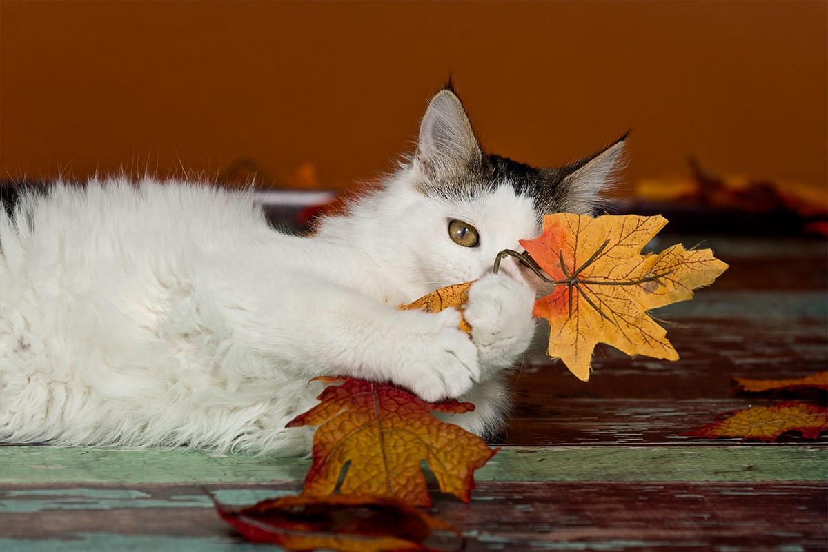 portrait of cat with leaf by Santa Fe pet photographer Cate Goedert