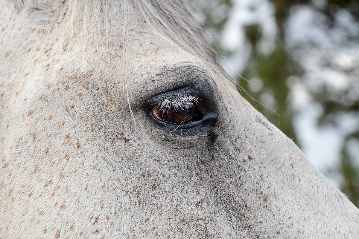 Horses portrait of a horse's eye photographed by Cate Goedert Santa Fe pet photographer