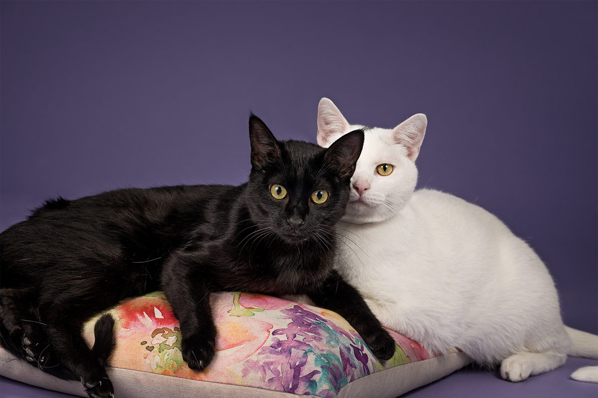 portrait of black cat and white cat by Cate Goedert Santa Fe pet photographer
