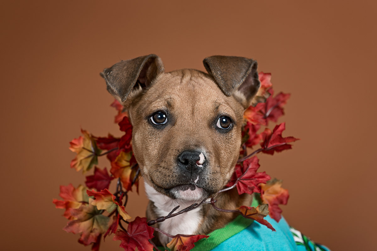 Rhona a puppy wearing a garland of leaves photographed by Cate Goedert Santa Fe pet photographer